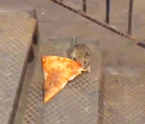 1442933989_pizza-rat-467